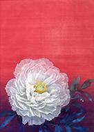 五月女佳織 「富貴花」