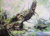 北川安希子 「静動の樹 – 屋久島」