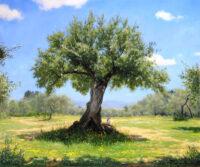 「オリーブの古木」 20F
