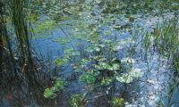「夏の池」 8M
