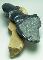 「ウエストウッデイオオシカクワガタ」 49×81×h26.5 黒御影石、六方石