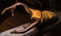「Cyclommatus alagari (アラガールホソアカクワガタ)」 50×30×20cm + 台座 黄色大理石、ブロンズ、古材