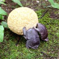 「夫婦で太陽を運ぶスカラベ」 黄色大理石、ブロンズ 18×11.5×h10cm