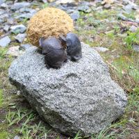 「夫婦で山を越えるスカラベ」 黄色大理石、ブロンズ、白御影石 38×23×h19cm