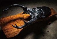 「西ノ森の大鹿 ‐Rhaetus westwoodi‐」 60×139×H68cm 黒御影石、ブロンズ、樟