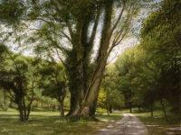 「道と巨木」 12P
