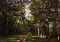 「森の道」 20M
