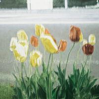 「#メメントモリな風景について」 Oil and acrylic on canvas 455×455(㎜)