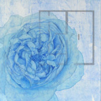 「Innocent blue ⅩⅧ」 	3S(273×273mm)